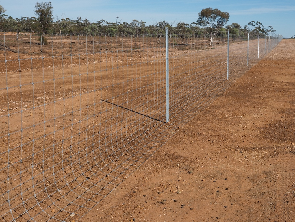QLD Wild Dog Exclusion Fence